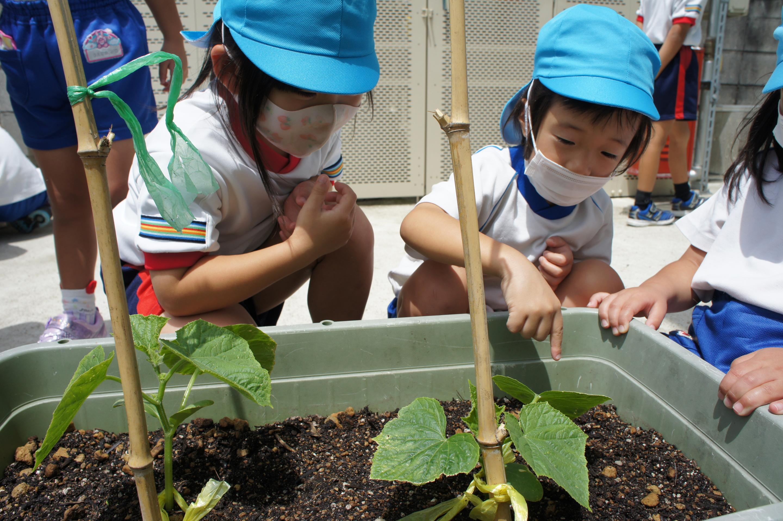 夏野菜21-8